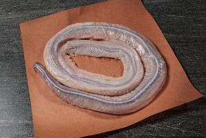 rattlesnake meat